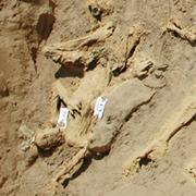 Afghan Mass Grave